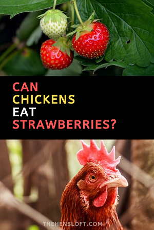 strawberries and a red chicken