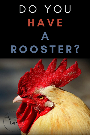 Methods for identifying roosters