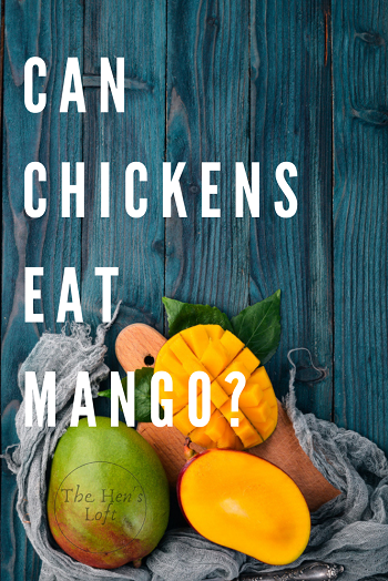 are mangos ok for chickens to eat