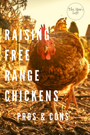 free range chickens pros and cons