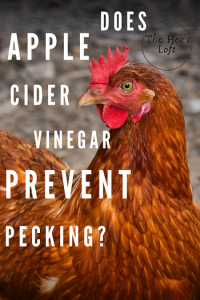 does apple cider vinegar stop chickens from pecking