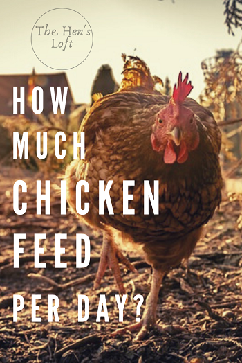 how much chicken feed per day