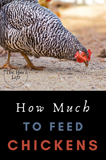 how much to feed chickens