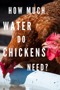 how much water do chickens need every day