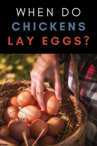 when do chickens lay eggs