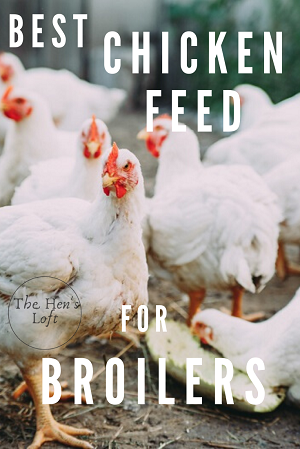 chicken feed for meat birds and broiler hens