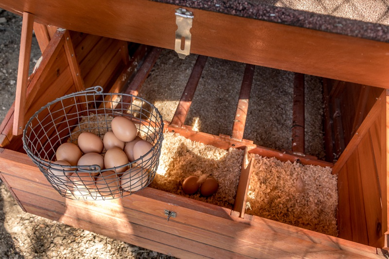 chicken nesting boxes with basket of eggs