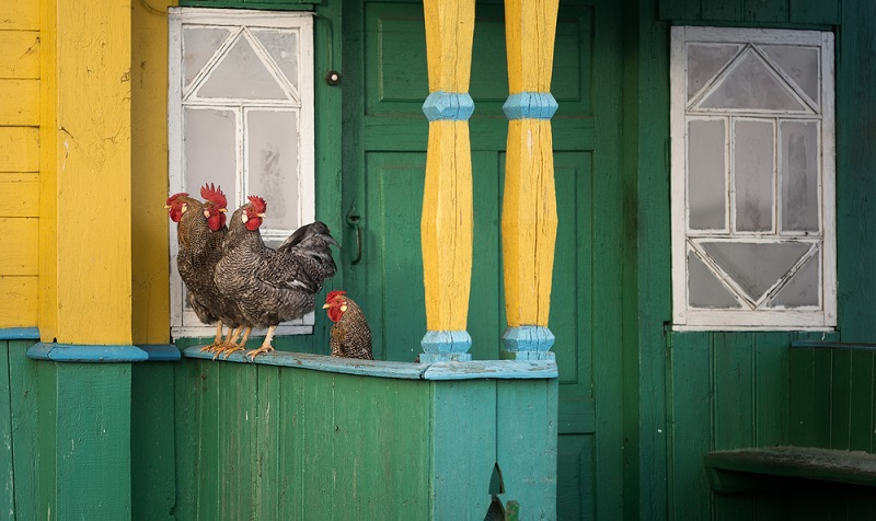 how to keep chickens from perching on porch