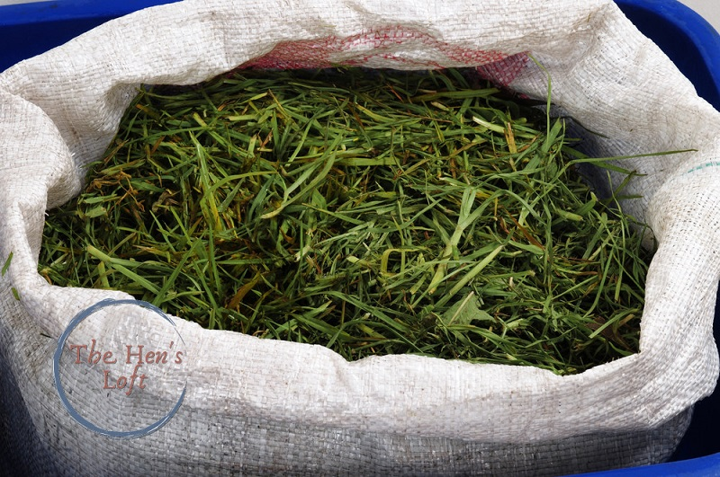bag of grass clippings to feed chickens