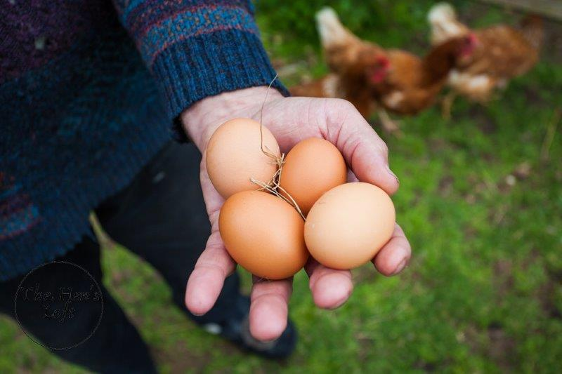 woman holding brown chicken eggs in her hand